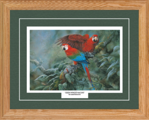 f-green-winged-macaws